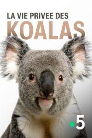 La vie privée des koalas