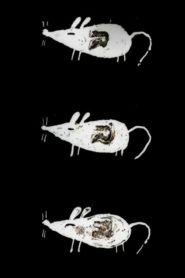 Trauma Chameleon